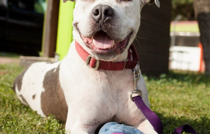 AUSTIN PETS ALIVE! PET OF THE WEEK: OSCAR